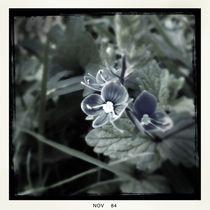 Old-fashioned flowers 06 von Mikel Cornejo Larrañaga