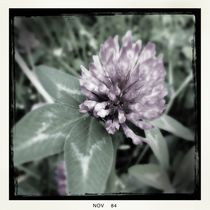 Old-fashioned flowers 10 von Mikel Cornejo Larrañaga