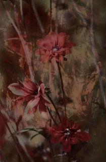 DALIE by © Ivonne Wentzler
