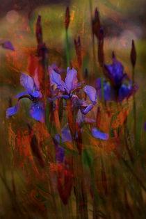 BLUE IRIS von © Ivonne Wentzler
