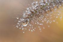 Wasserdiamanten von Janine Brauneis