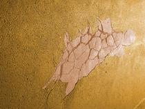 Alien Fossil von Herbert Rücke