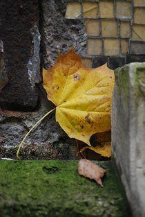 Herbst2014-70