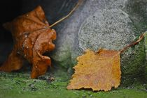 Herbst2014-68
