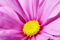 Blossom dream by Barbara Imgrund