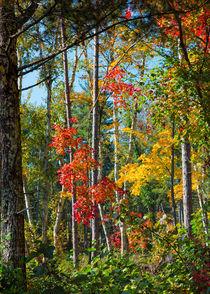 Peering Into Autumn von John Bailey