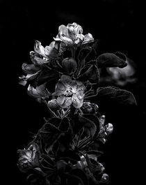 Backyard Flowers In Black And White 4 von Brian Carson