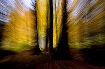 Waldgeister by derwaldrapp