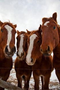 Horse Whispers by Tasha Komery