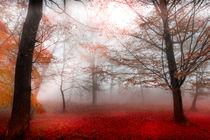morning fog von westlightart