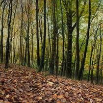 Autumn Textures von David Tinsley