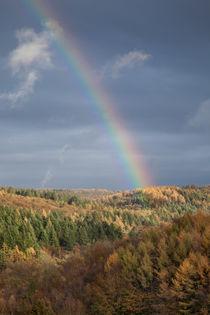 Rainbows End by David Tinsley