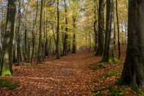 Autumn Woodland Walk by David Tinsley