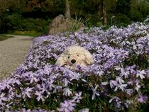 Alwood liebt Blumen by elke krause