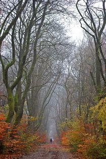 Herbstnebelwald... 1 von loewenherz-artwork