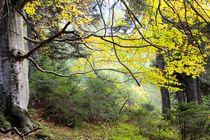 Mitten-Wald von © Ivonne Wentzler