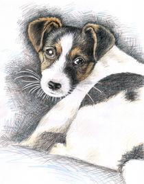 Jack Russel Terrier Welpe by Nicole Zeug