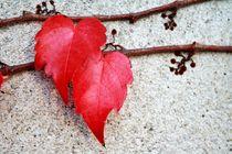heart to heart von Manuela Lange