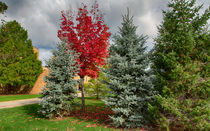 Deciduous And Evergreens by John Bailey