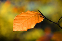 Herbstblatt by derwaldrapp