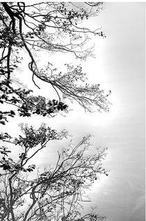 Baum am Wasser von Jens Hennig