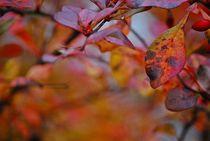 Herbst2014-133
