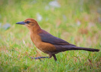 Madame Grackle by John Bailey