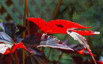Botanical Enchantment von John Bailey