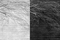 Verzweigungen  von Bastian  Kienitz