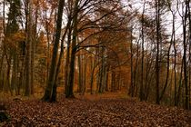 Herbstwald von Monika Haarpaintner