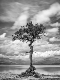 Milarrochy Tree by Frank Stettler