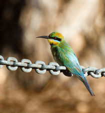 Beauty on chains von mbk-wildlife-photography
