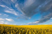 Clouds over Yellow by Wolfgang Kaehler