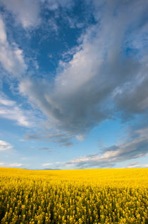 Clouds over Yellow von Wolfgang Kaehler