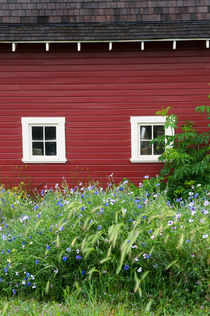 Flowers in front of red barn by Wolfgang Kaehler