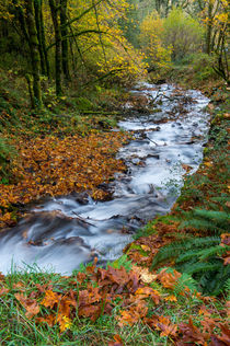 Fall Creek by Wolfgang Kaehler