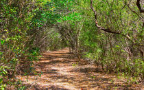 Crane Point Nature Trail by John Bailey