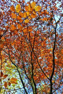 colours of autumn von urs-foto-art
