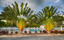 Travelers Palm by John Bailey