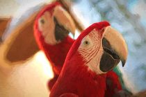 Two Ara parrots portrait by Roberto Giobbi