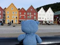 Teddybär in Bergen by Olga Sander