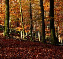 Herbst im Neandertal von anowi