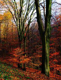 Herbst im Neandertal2 by anowi