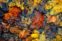 Nasser Herbst by derwaldrapp