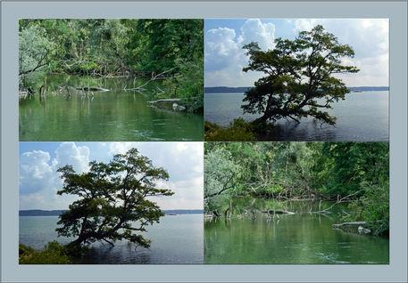 Viererbild-vegetation-am-wasser