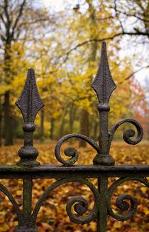 Herbstzaun by sylbe