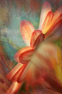Dahlia abstrakta by © Ivonne Wentzler