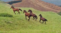 running horses in the graze von bruno paolo benedetti