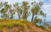 Trees On A Sand Dune Overlooking Lake Michigan von John Bailey