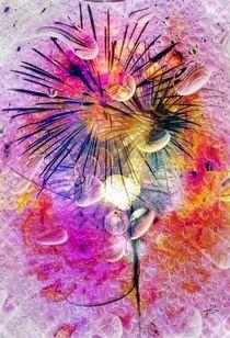 Spring Firework by Einzigartig von Nico  Bielow